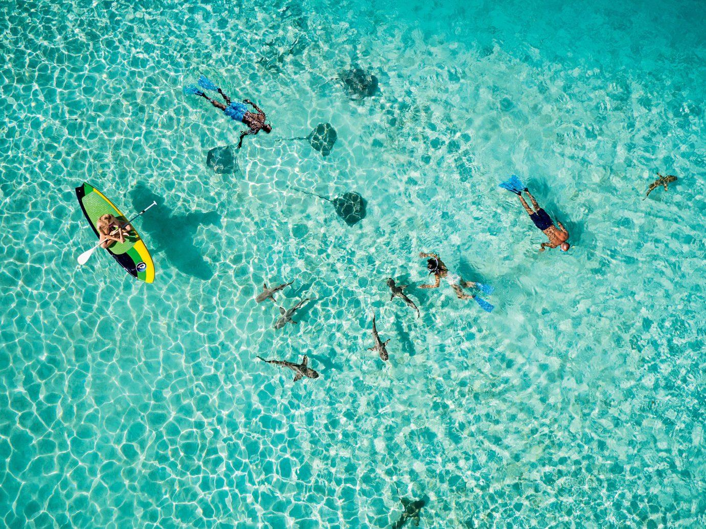 Cruise Travel Luxury Travel Trip Ideas water Sport aqua Sea organism underwater water sport turquoise marine biology Ocean sky swimming leisure reef snorkeling recreation swimming pool blue ocean floor