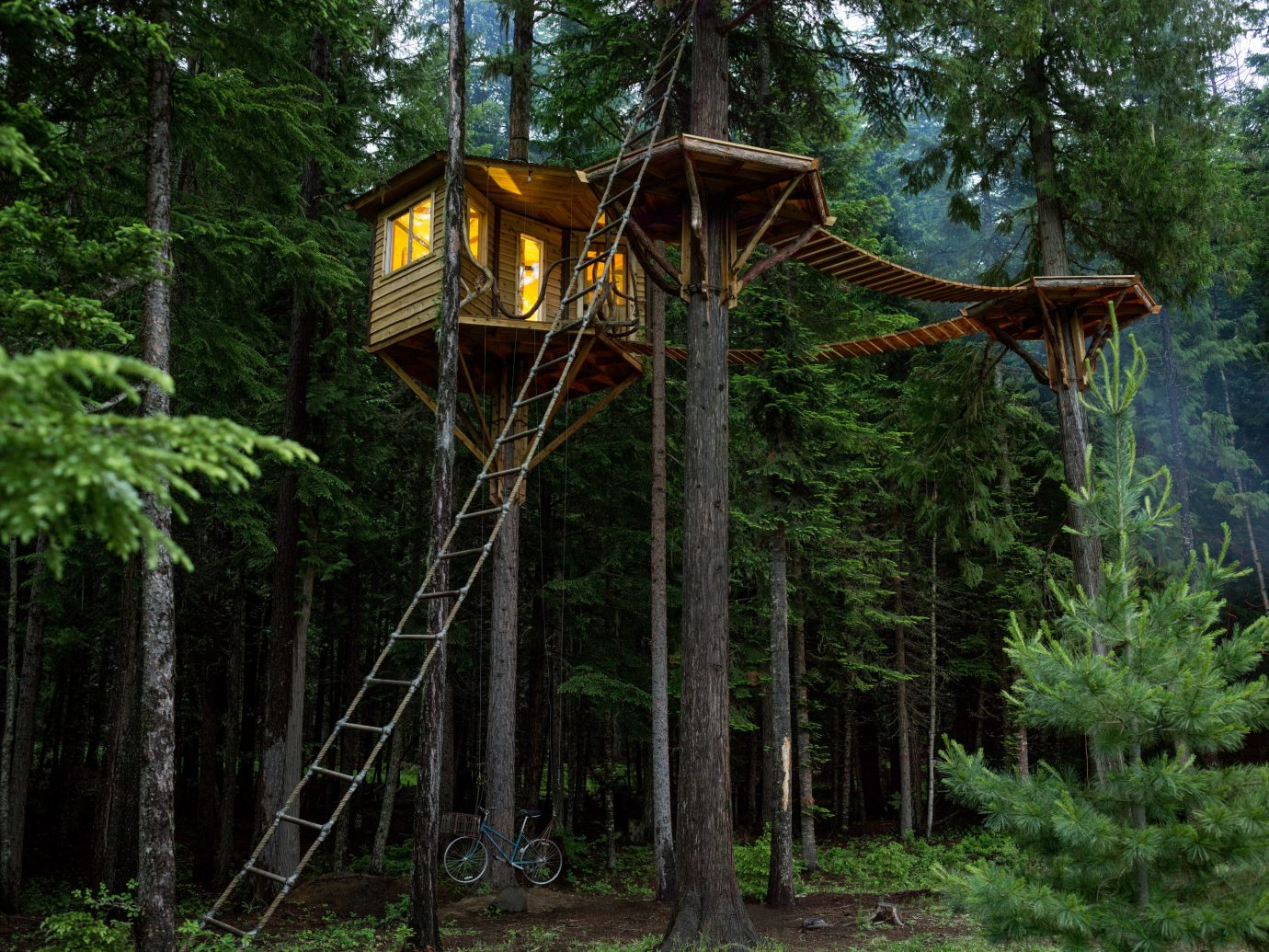 Arts + Culture tree outdoor habitat Nature wilderness Forest natural environment woodland woody plant rainforest Jungle outdoor structure tree house area wooded wood lush
