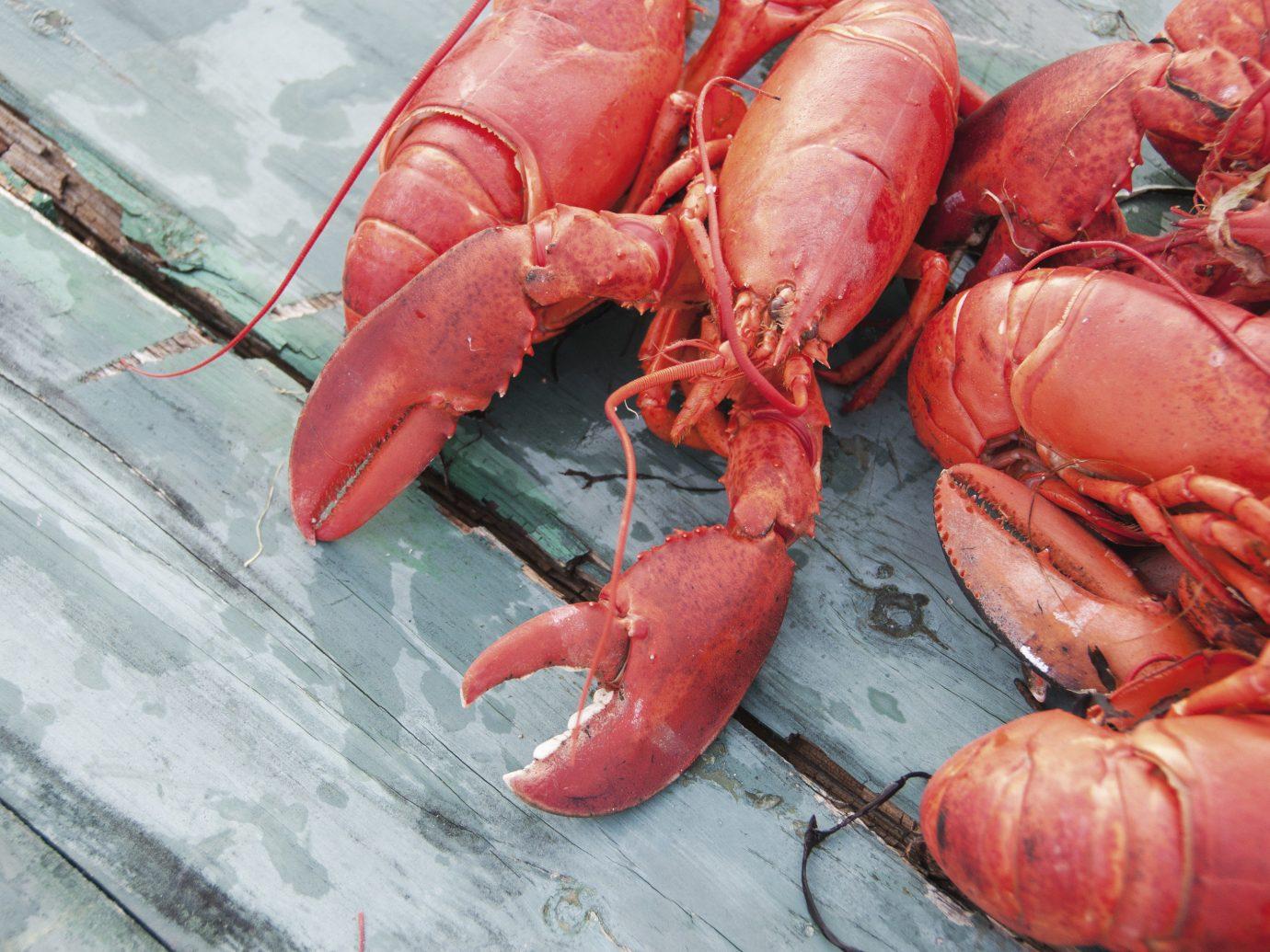 Arts + Culture arthropod invertebrate animal food red lobster dungeness crab Seafood american lobster homarus crustacean decapoda animal source foods fish