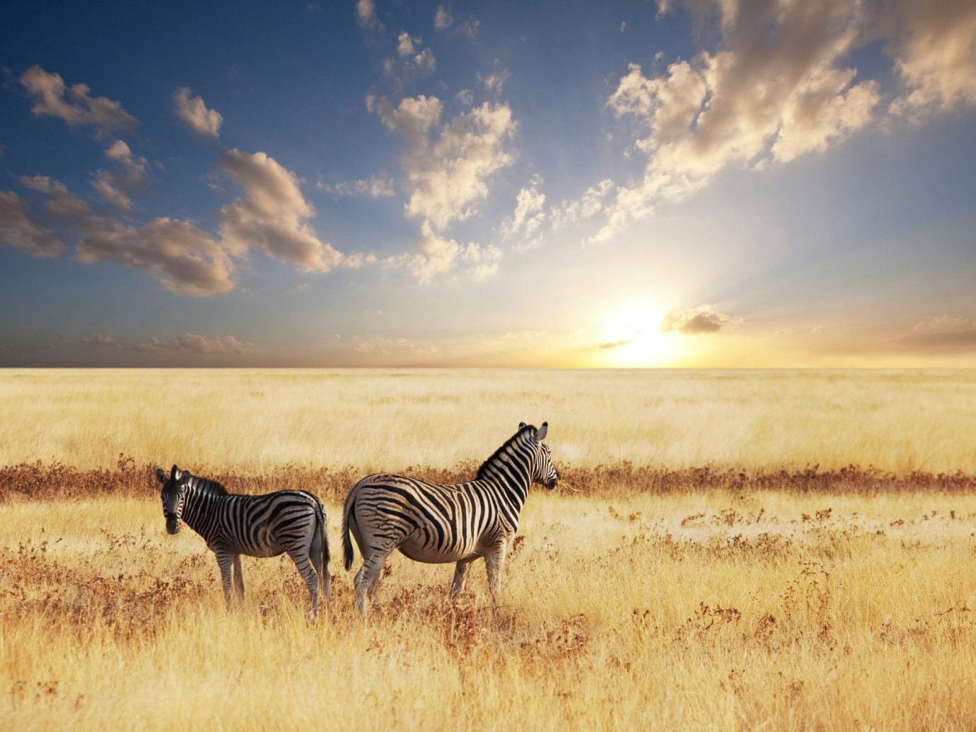 Style + Design sky grass outdoor zebra field animal plain grassland steppe savanna prairie horizon natural environment grass family morning landscape group mammal rural area horse like mammal Sunset herd evening sunrise agriculture grassy ecoregion Safari day clouds