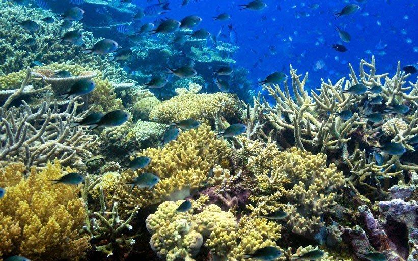 Beach coral reef habitat reef coral reef fish natural environment landform marine biology outdoor coral geographical feature Nature ecosystem stony coral biology organism underwater aquarium freshwater aquarium vegetable shoal Garden variety ocean floor