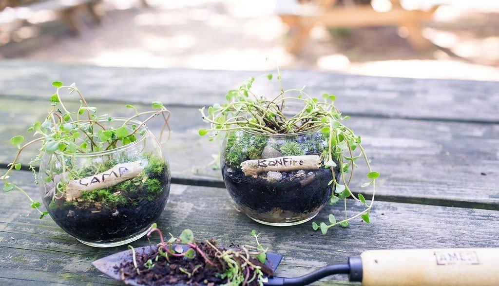 Trip Ideas ground green plant flora soil leaf flower Garden produce herb houseplant bonsai