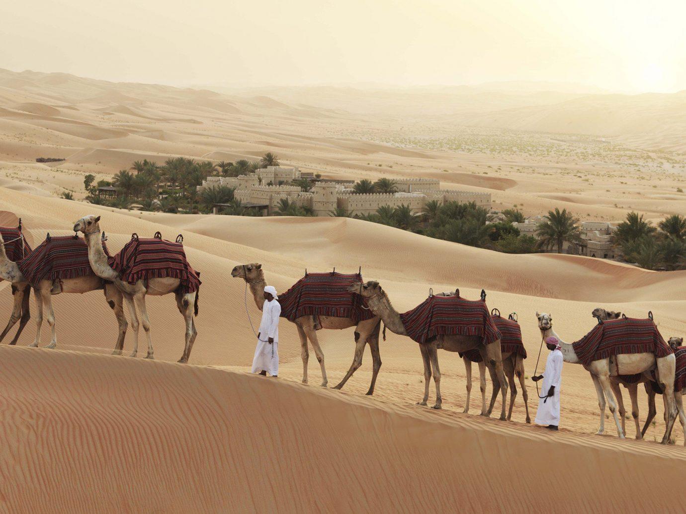Beauty Trip Ideas sky outdoor Camel natural environment landform sahara Desert geographical feature aeolian landform erg cross arabian camel landscape camel like mammal herd mustang horse group wadi cattle line several