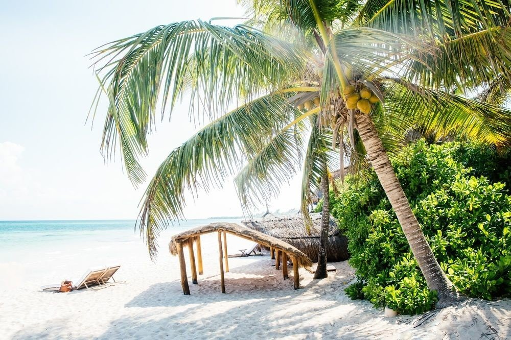 Beach Boutique Hotels Honeymoon Hotels Mexico Romance Tulum tree outdoor palm plant vacation arecales palm family caribbean tropics Resort Jungle shore
