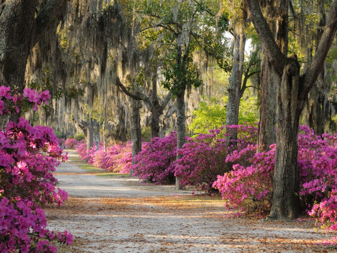 Road Trips tree outdoor plant flower flora pink botany Garden park season woodland woody plant leaf land plant autumn blossom shrub purple landscape botanical garden flowering plant lawn surrounded Forest