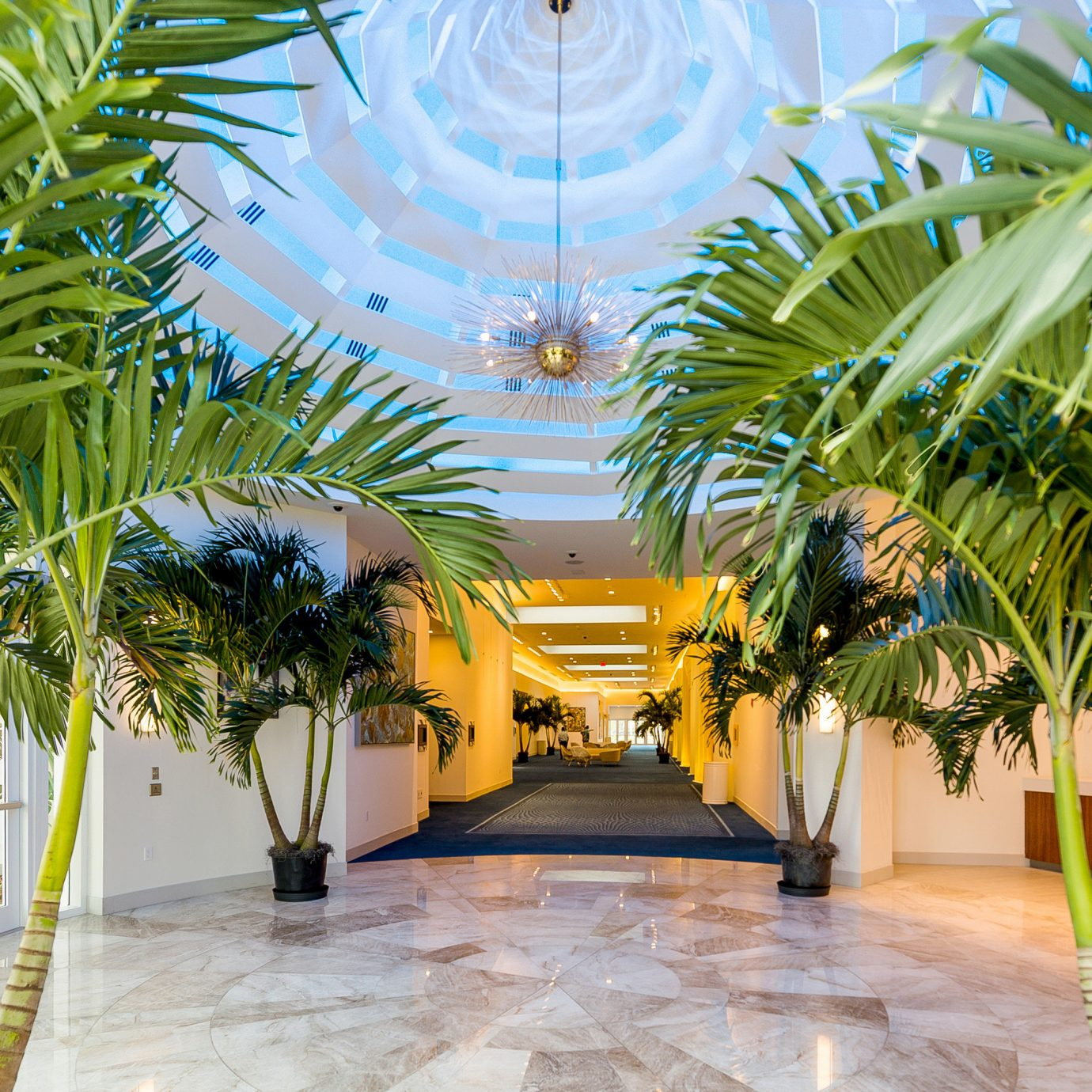 plant palm tree arecales palm tree outdoor structure Resort