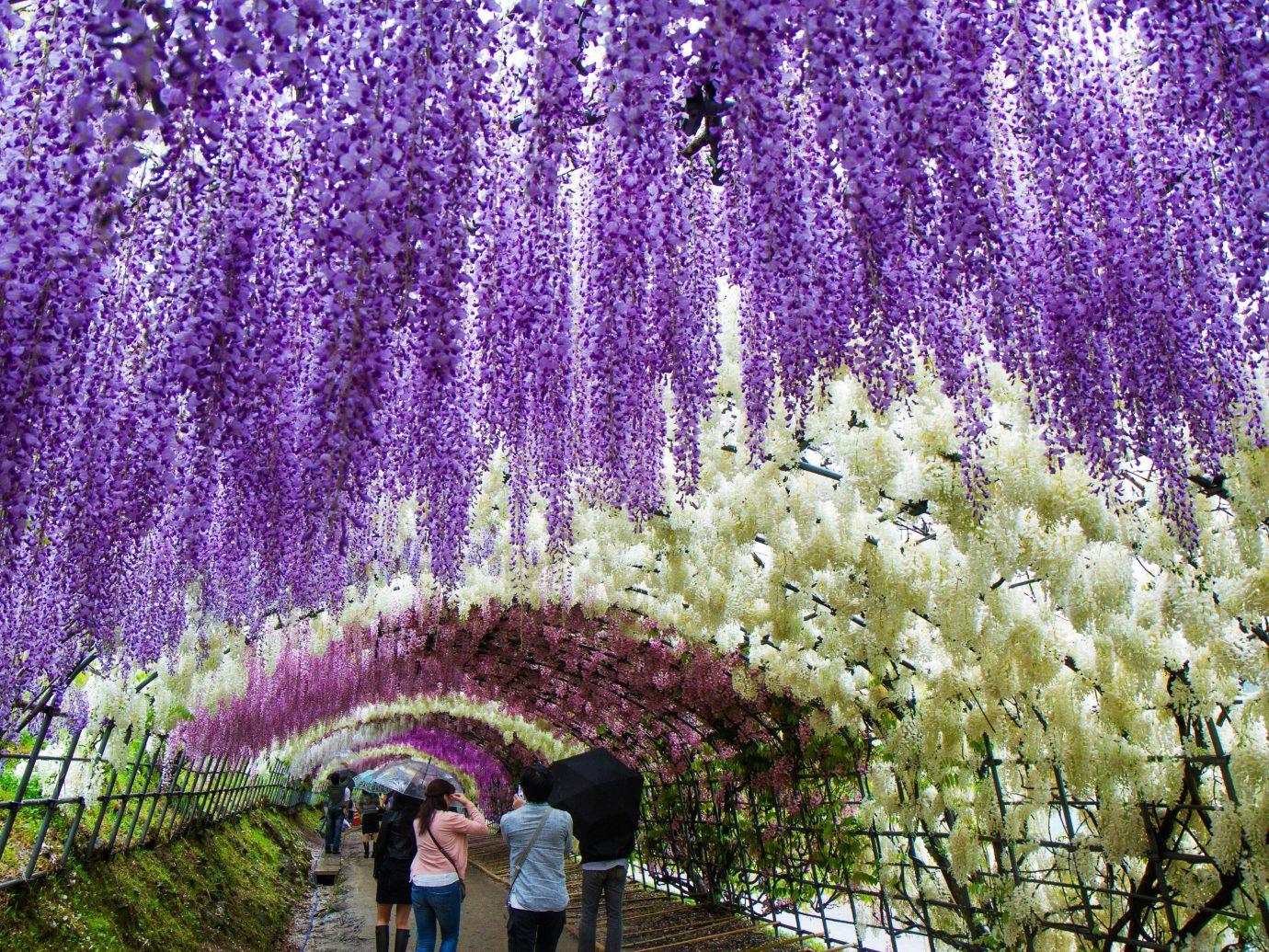 Offbeat flower lavender plant flora botany english lavender land plant flowering plant blossom shrub