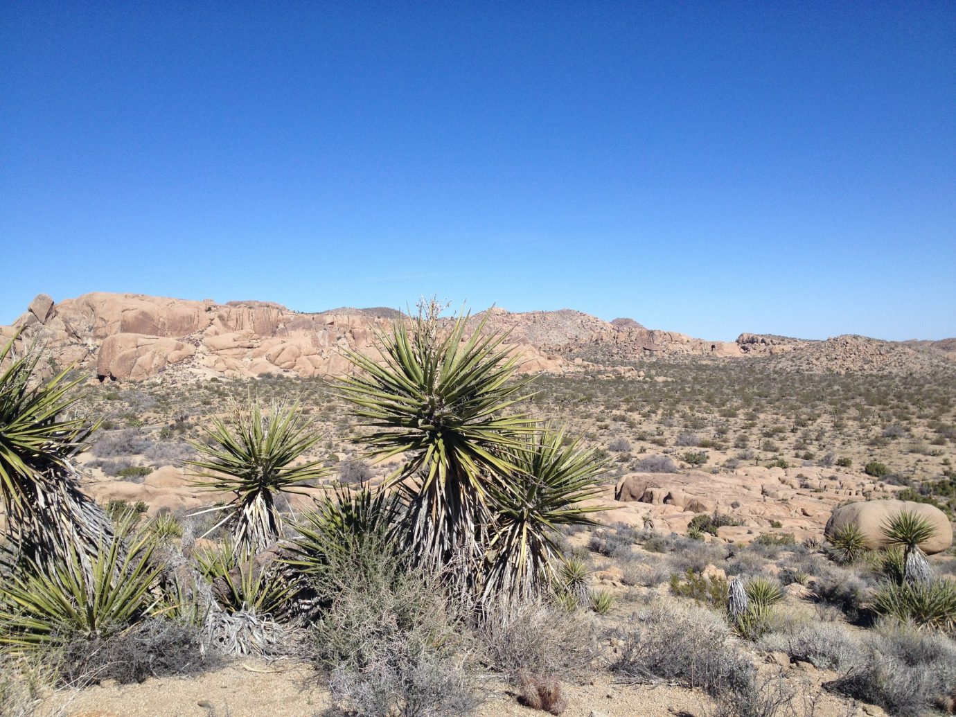 Trip Ideas sky outdoor Desert plant natural environment landform geographical feature wilderness aeolian landform tree ecosystem mountain wadi landscape rock vacation Lake arecales valley plateau sand dry sahara geology dirt area bushes agave
