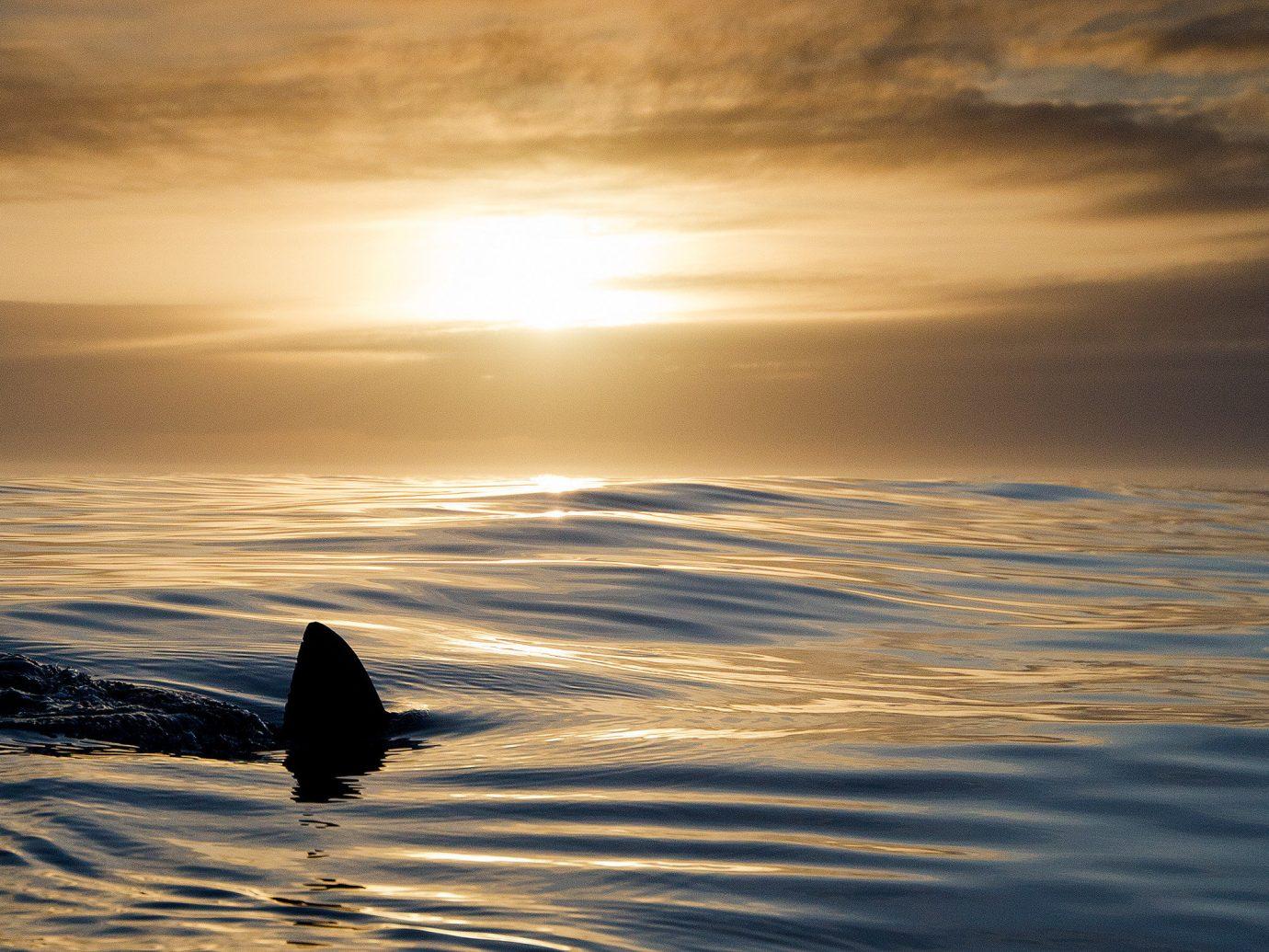 Trip Ideas outdoor water Sea Ocean sky Sunset horizon wave wind wave calm marine mammal shore atmosphere Sun sunlight sunrise cloud whales dolphins and porpoises dolphin evening dawn