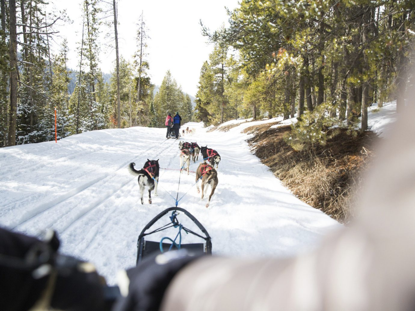 Trip Ideas Weekend Getaways tree outdoor snow transport vehicle land vehicle person Winter racing winter sport bicycle sports slope wooded