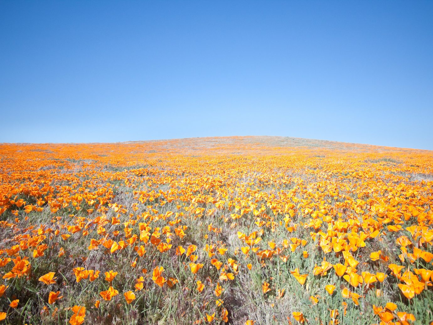 Poppy Reserve in Antelope Valley, California