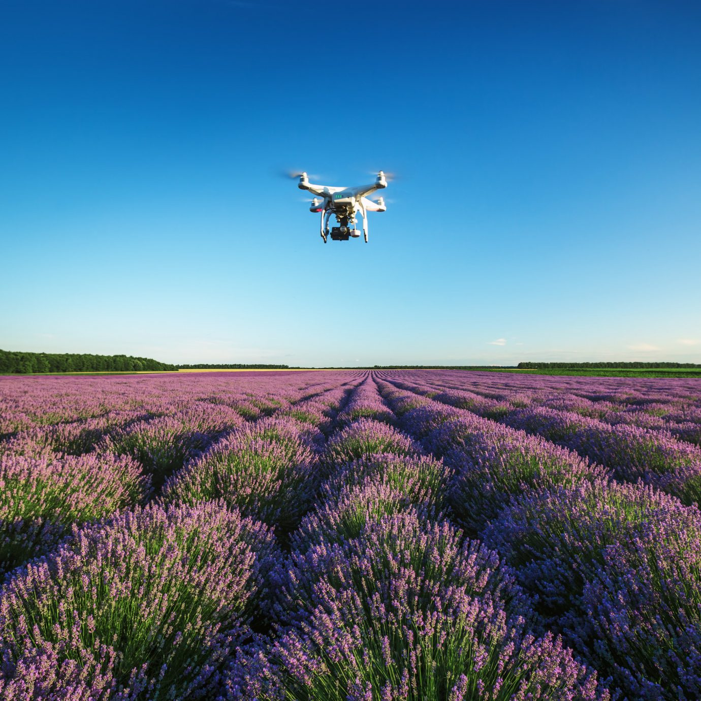 drone Travel Shop Travel Tech Travel Tips grass sky outdoor flower field grassland plant horizon lavender prairie plain grass family meadow atmosphere of earth land plant grassy aircraft steppe flowering plant english lavender agriculture wildflower runway land lush landing hillside day
