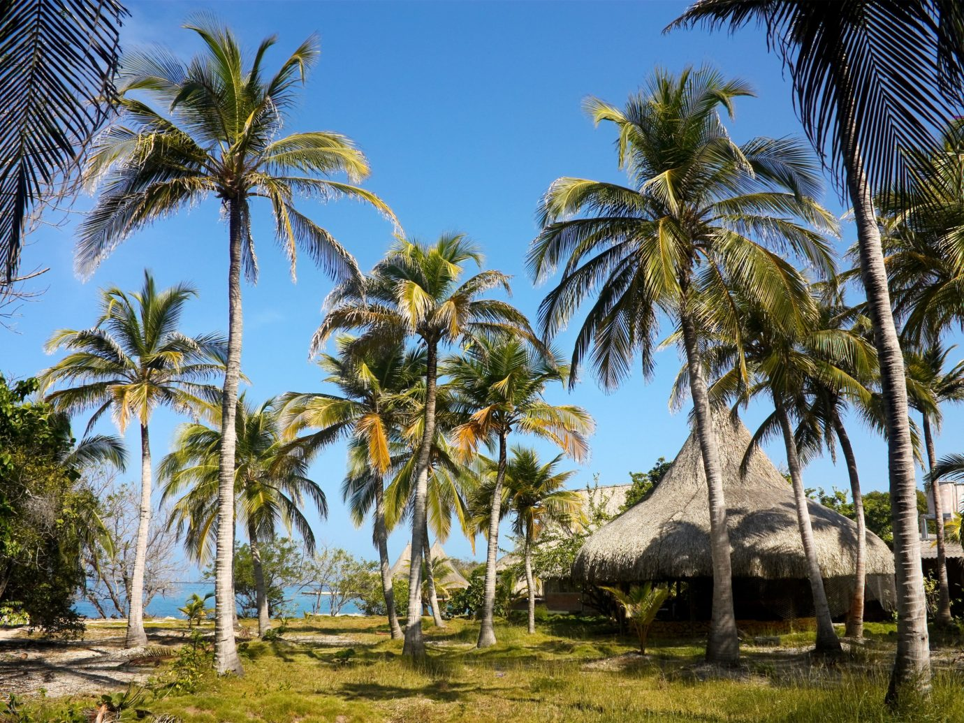 caribbean Secret Getaways Trip Ideas tree palm outdoor plant sky grass palm tree arecales Resort tropics tourist attraction date palm tourism vacation leisure attalea speciosa area shade lined surrounded