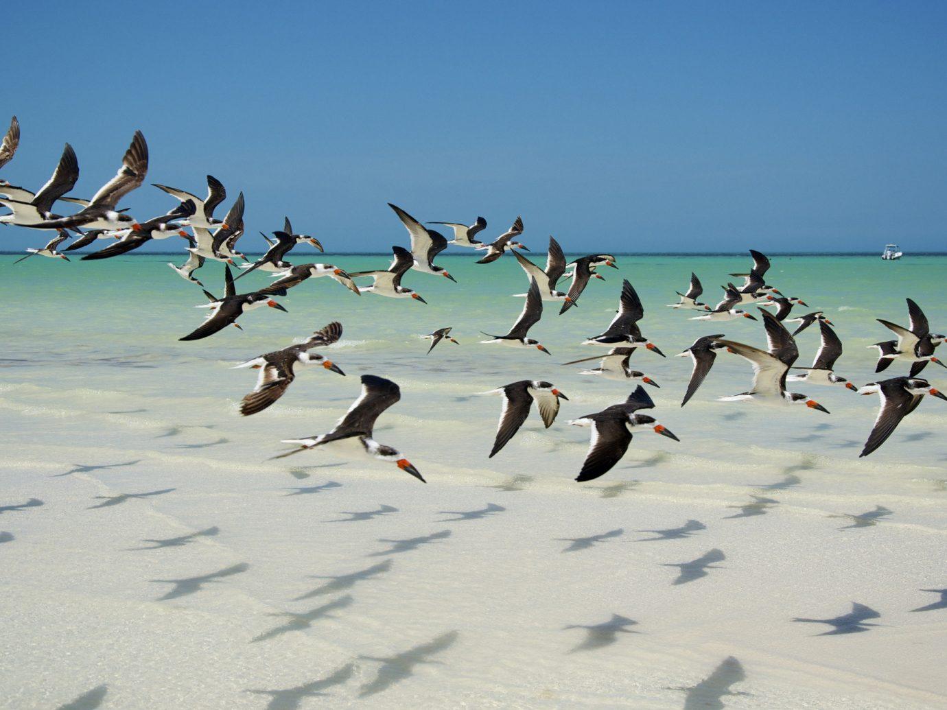 Mexico Trip Ideas Weekend Getaways outdoor Bird flock Beach Sea group aquatic bird wind several day sandy