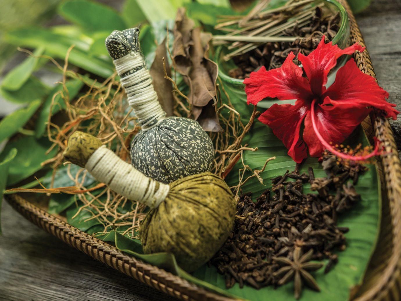 Health + Wellness Hotels Spa Retreats plant flower leaf christmas decoration food vegetable