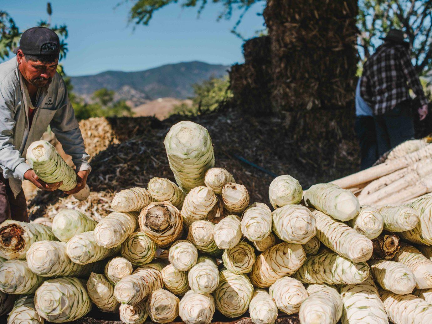 Arts + Culture Mexico Oaxaca Trip Ideas produce vegetable plant local food food