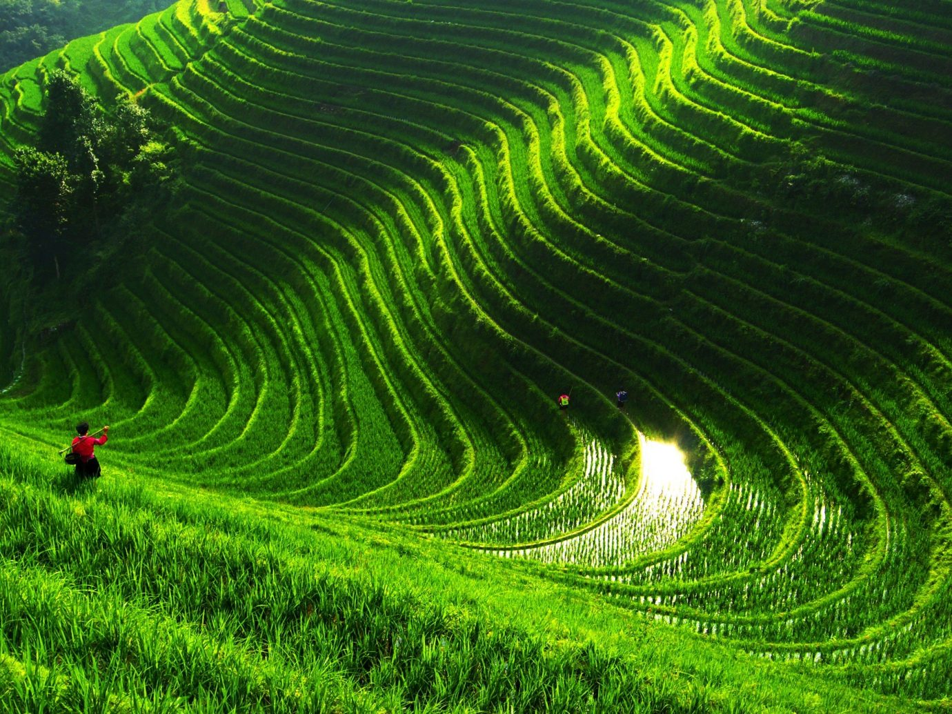 Offbeat grass green agriculture geographical feature field Terrace outdoor red paddy field grassland leaf landscape crop plantation plain flower