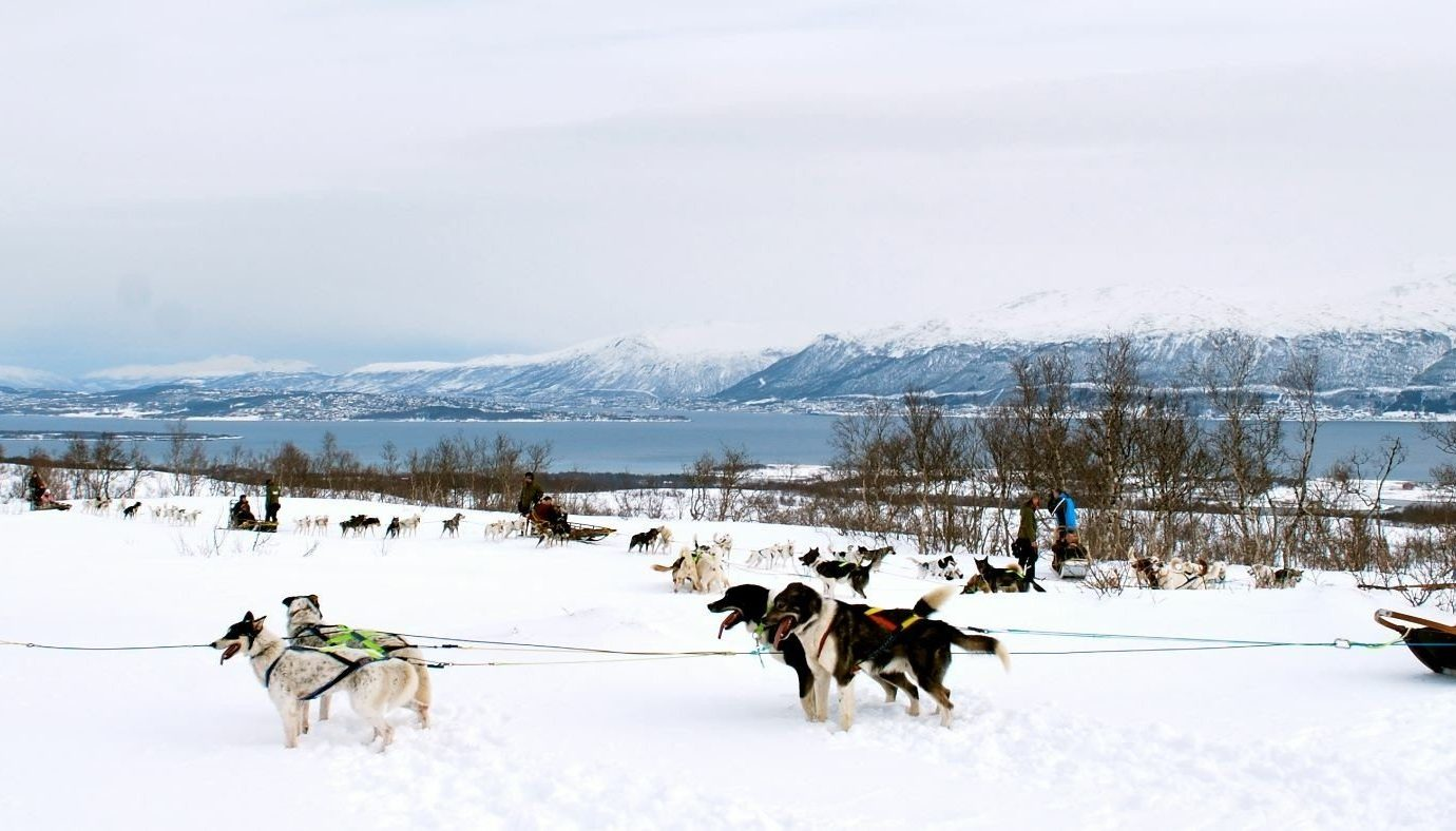 Adventure Luxury Travel Outdoor Activities Trip Ideas snow outdoor transport sled sky dog sled vehicle Winter land vehicle mushing season group sled dog racing day