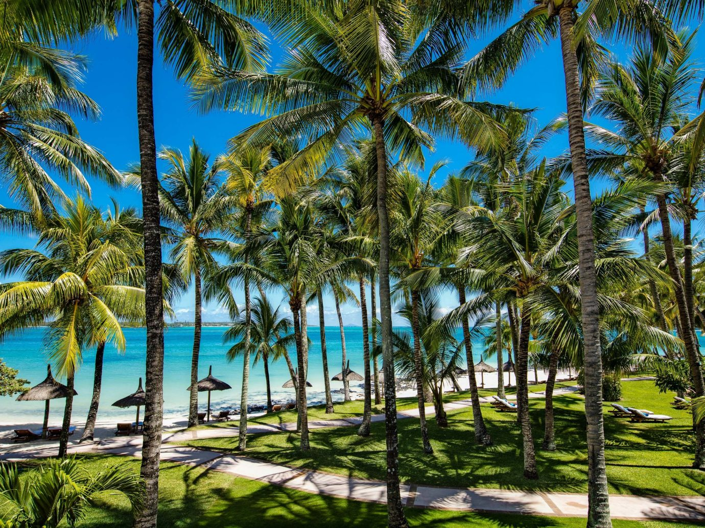 Trip Ideas tree outdoor palm grass plant tropics vegetation Resort palm tree arecales water sky caribbean vacation coconut computer wallpaper leisure lined area shade