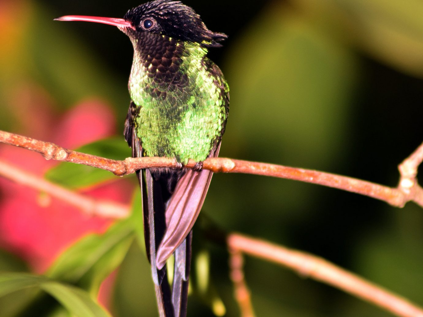 Hotels hummingbird animal Nature Bird green beak flora fauna flower botany close up plant macro photography leaf branch plant stem pollinator
