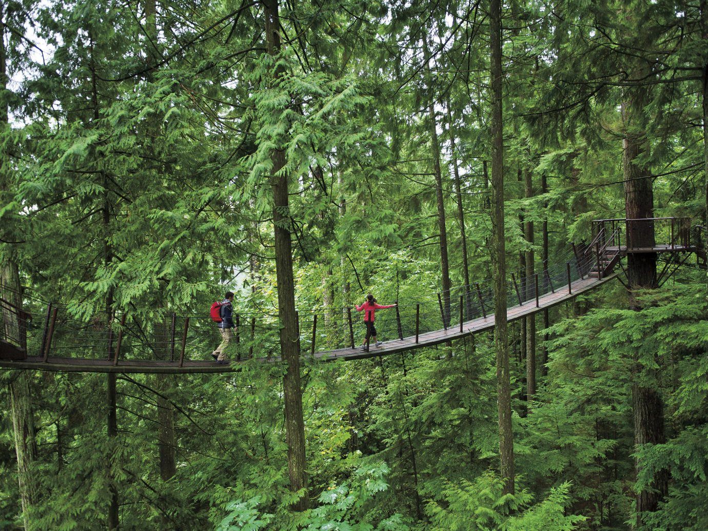 Trip Ideas tree outdoor Forest habitat wooded natural environment bridge wilderness ecosystem old growth forest woodland rainforest canopy walkway temperate broadleaf and mixed forest wood temperate coniferous forest biome trail Jungle suspension bridge plant area lush surrounded
