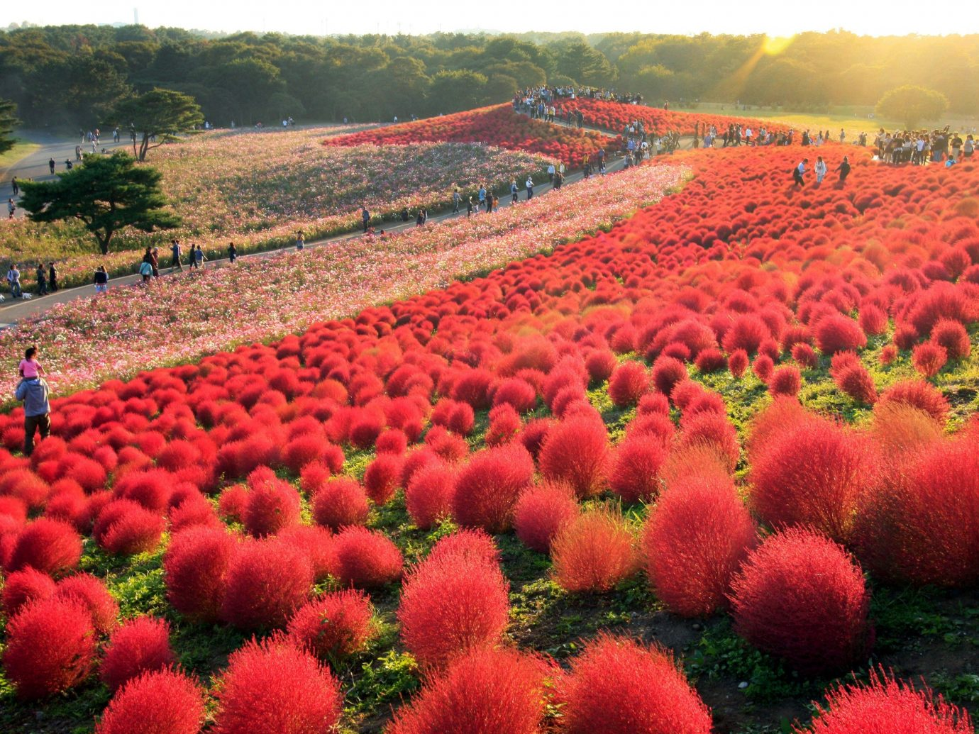 Trip Ideas grass flower outdoor plant field land plant flowering plant daisy family soil tulip annual plant colorful Garden colored crowd