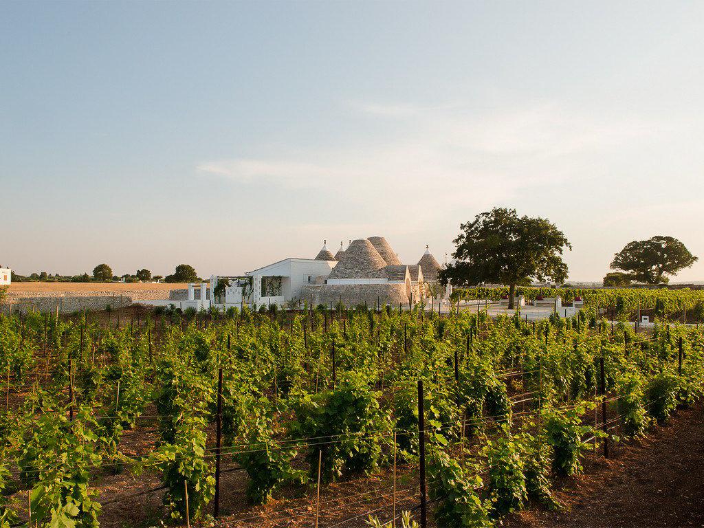 Boutique Hotels Hotels Trip Ideas sky tree outdoor agriculture Vineyard field Farm rural area crop Nature plantation landscape Village lush