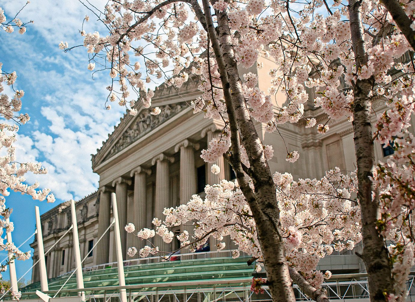 View of Brooklyn Museum with cherry blossom trees in bloom