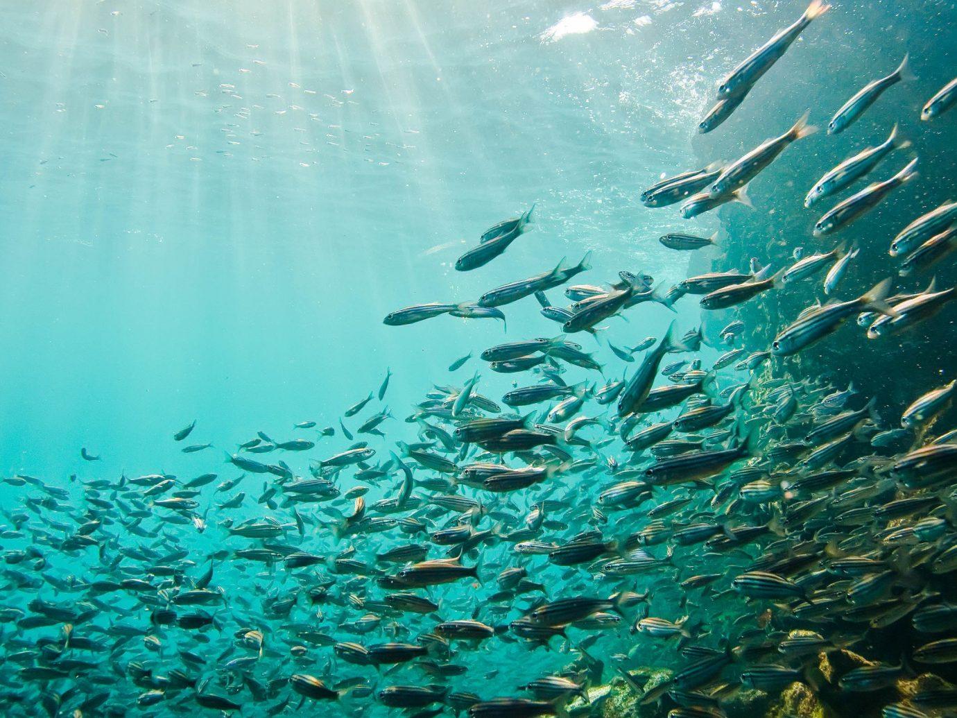 water Sea underwater Ocean marine biology organism sunlight water resources fish reef shoal