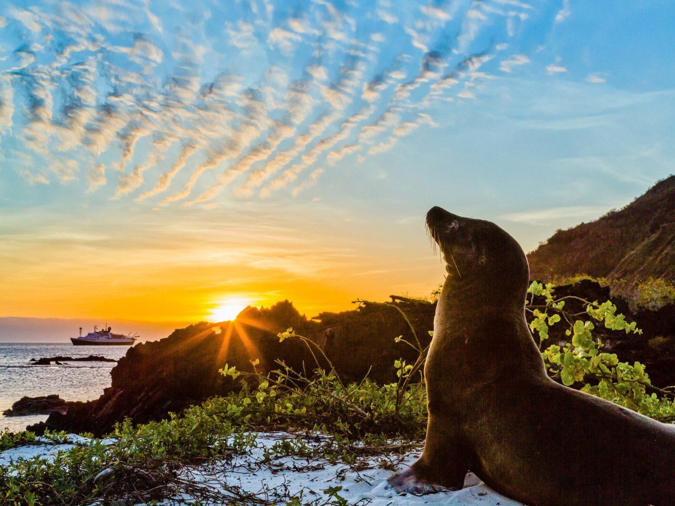 sky shore seals Sea rock Coast Wildlife Beach sunlight Ocean grass promontory marine mammal wave cape cloud