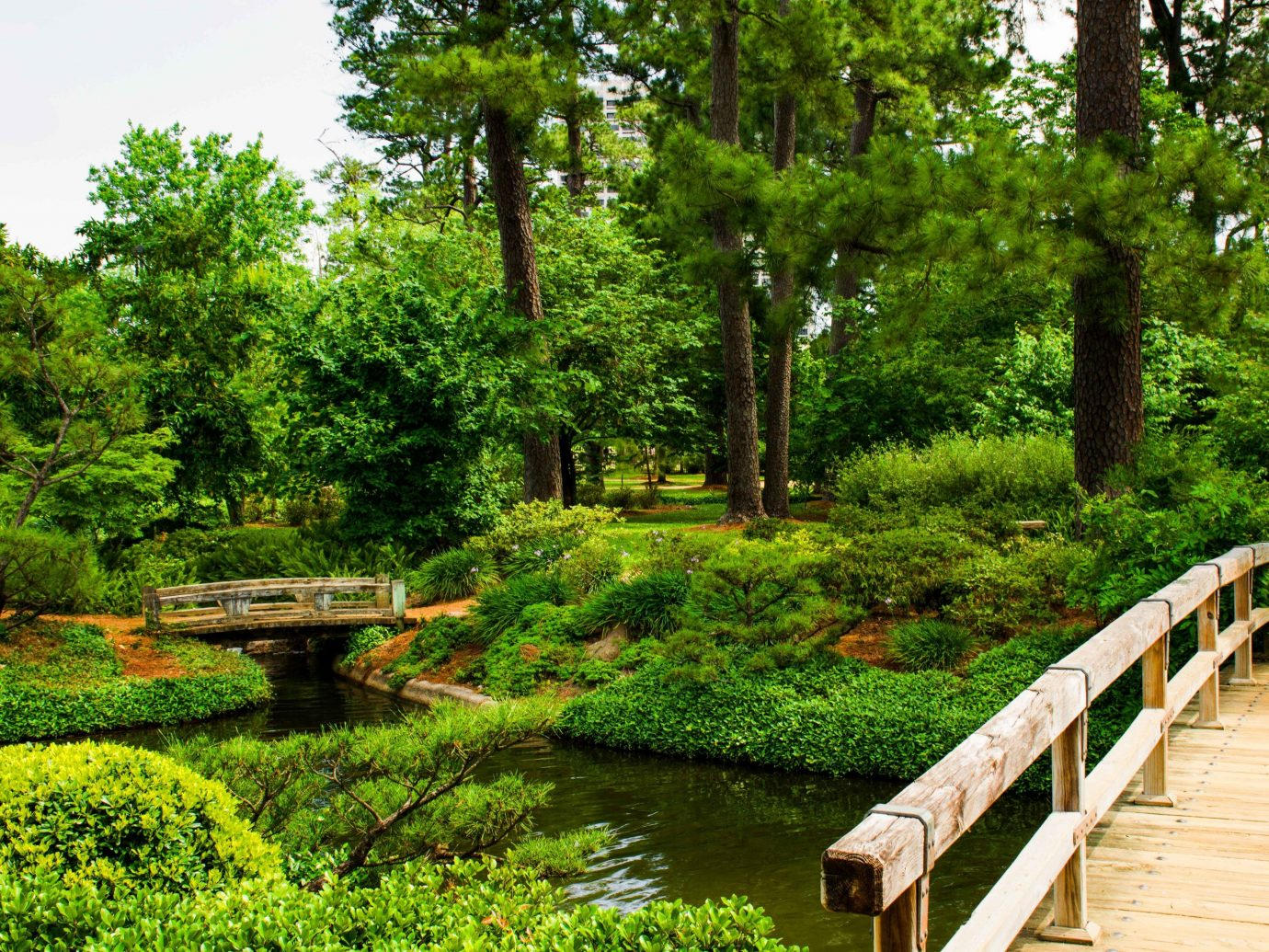 Houston Outdoors + Adventure Texas Trip Ideas tree outdoor bench grass Nature vegetation botanical garden Garden nature reserve park plant pond wooden water landscape wetland reflection bank landscaping watercourse riparian forest shrub bayou old growth forest walkway wood surrounded