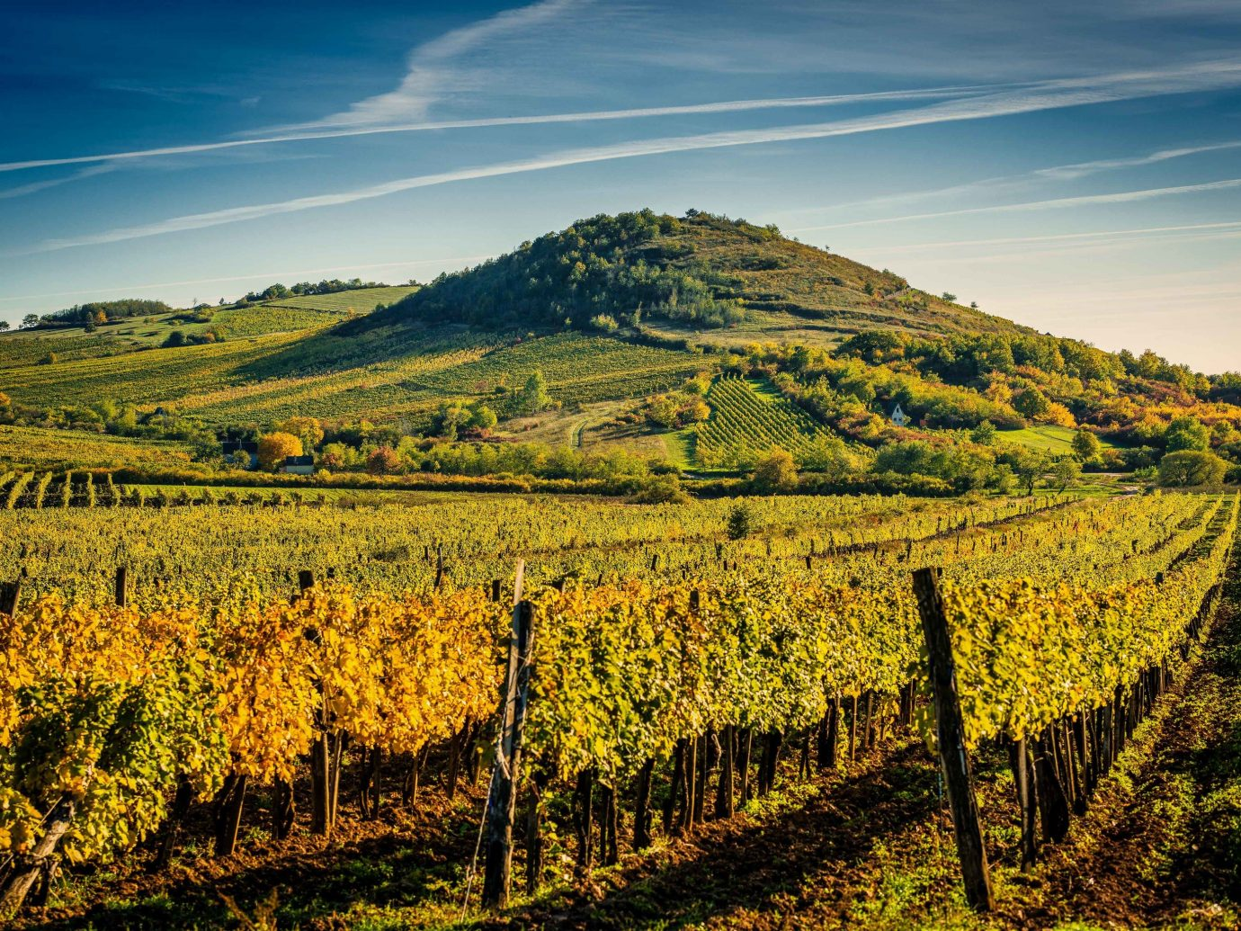 Croatia Eastern Europe europe Montenegro Slovenia Trip Ideas agriculture sky Vineyard leaf field hill morning rural area tree landscape sunlight crop mountain autumn plantation