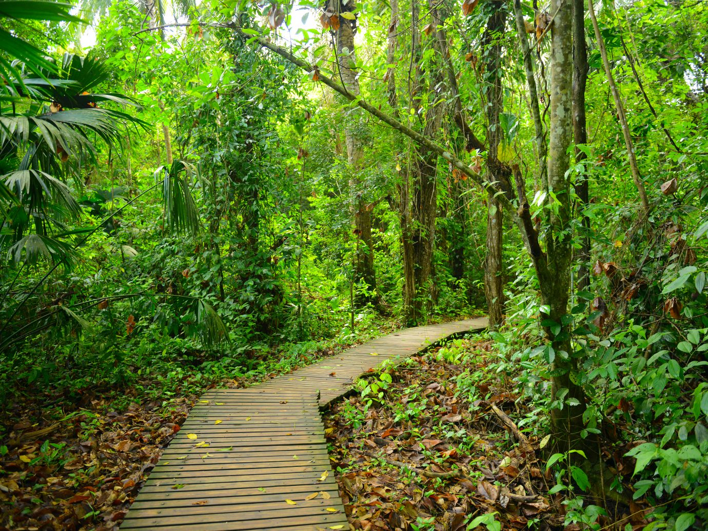 The walking way through the jungle in Tayrona National Park, Colombia.