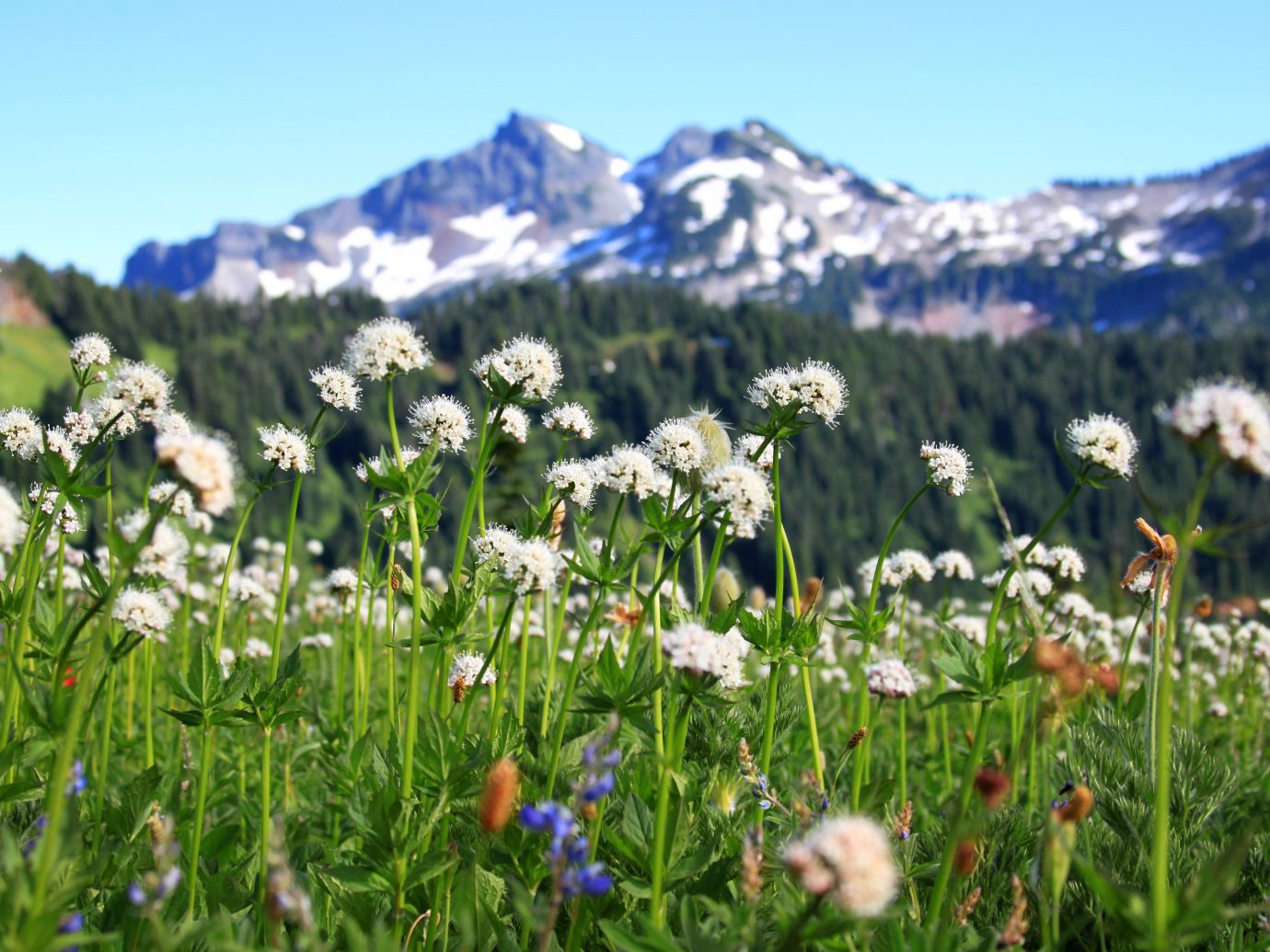 Mount Rainier in Summer