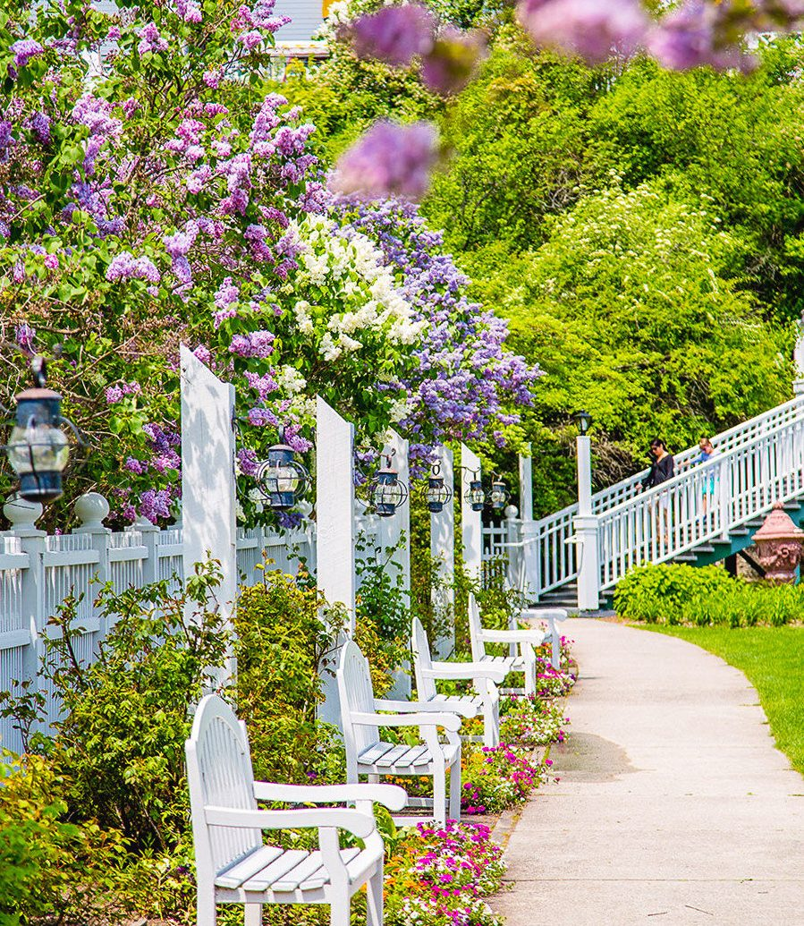 Trip Ideas tree outdoor flower plant building purple flora spring Garden flowering plant floristry outdoor structure shrub flower arranging park landscaping walkway floral design bushes porch surrounded