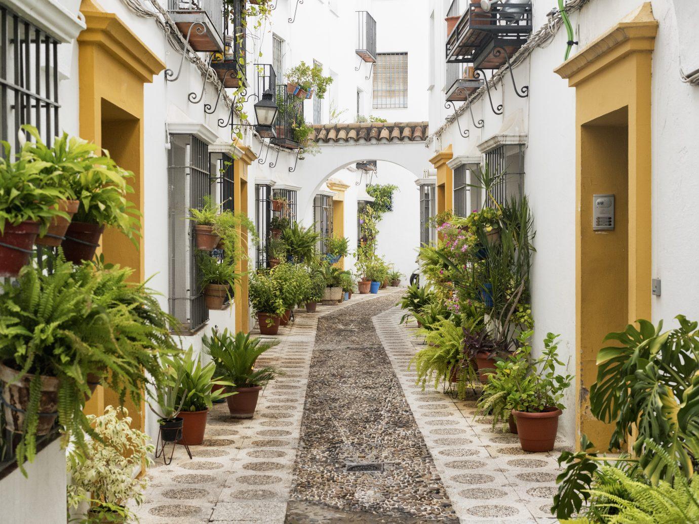 Cordoba (Andalucia, Spain): street