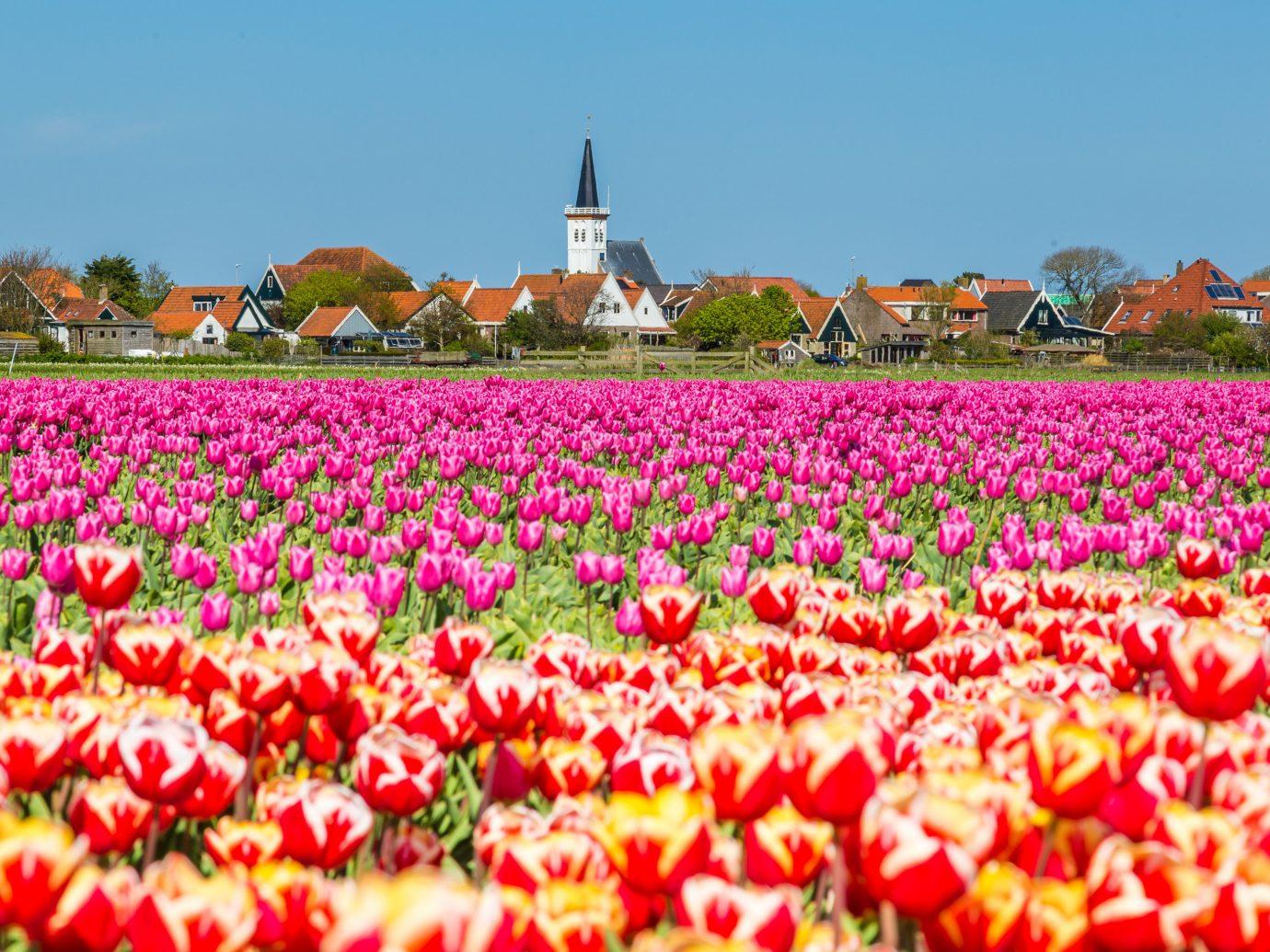 Texel, Netherlands