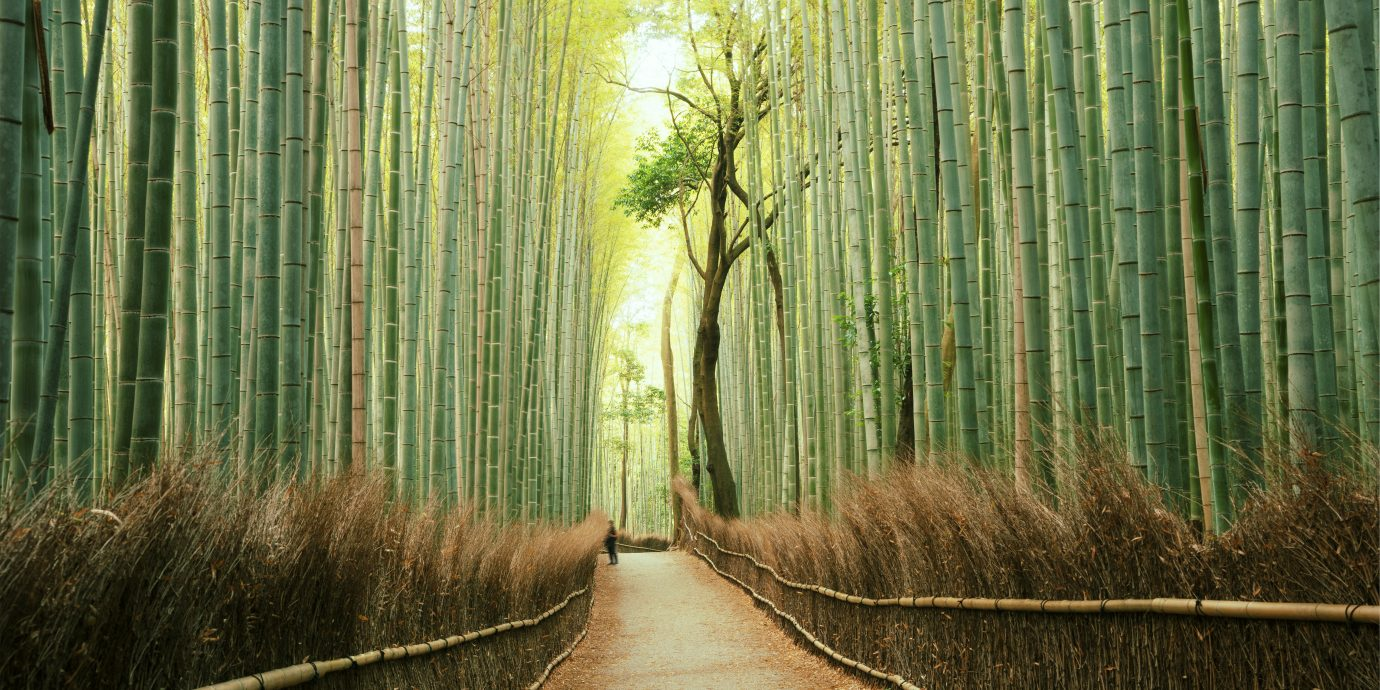 Arashiyama Bamboo Forest in Kyoto, Japan