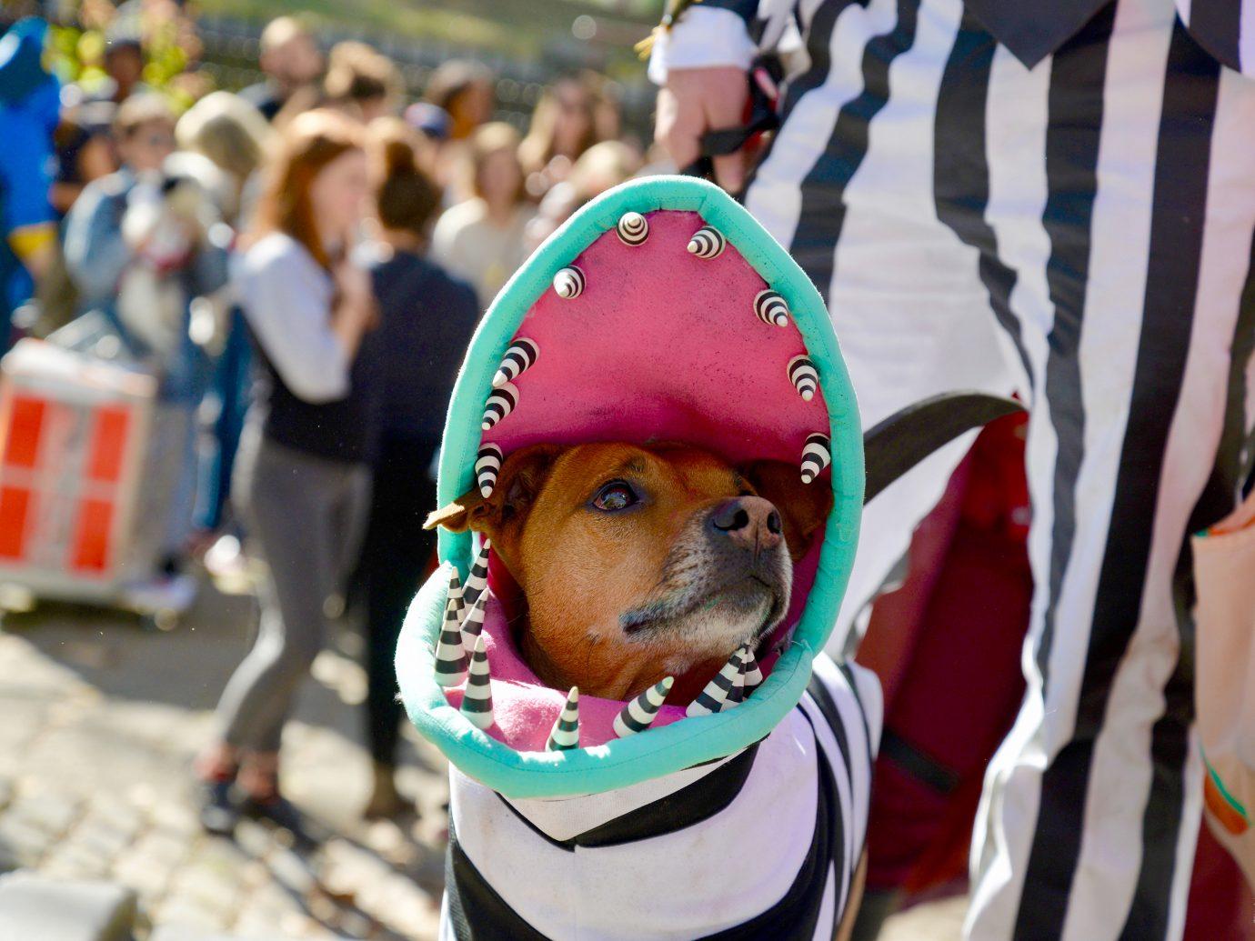 dog in beetlejuice monster halloween costume