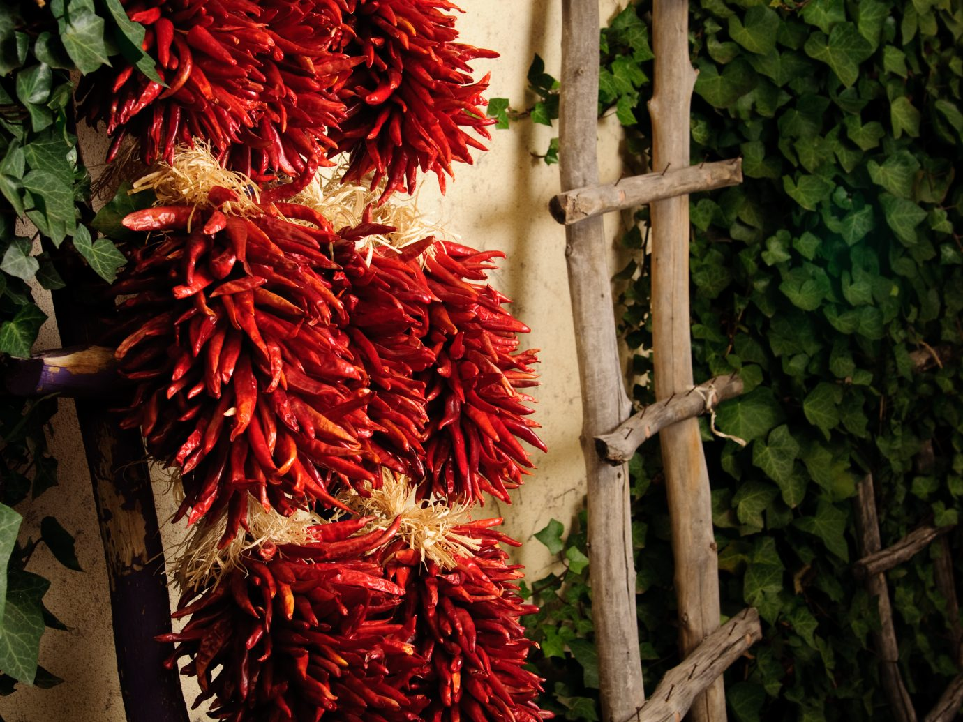 Red Chile ristra in a courtyard in Old Town in Albuquerque, New Mexico.