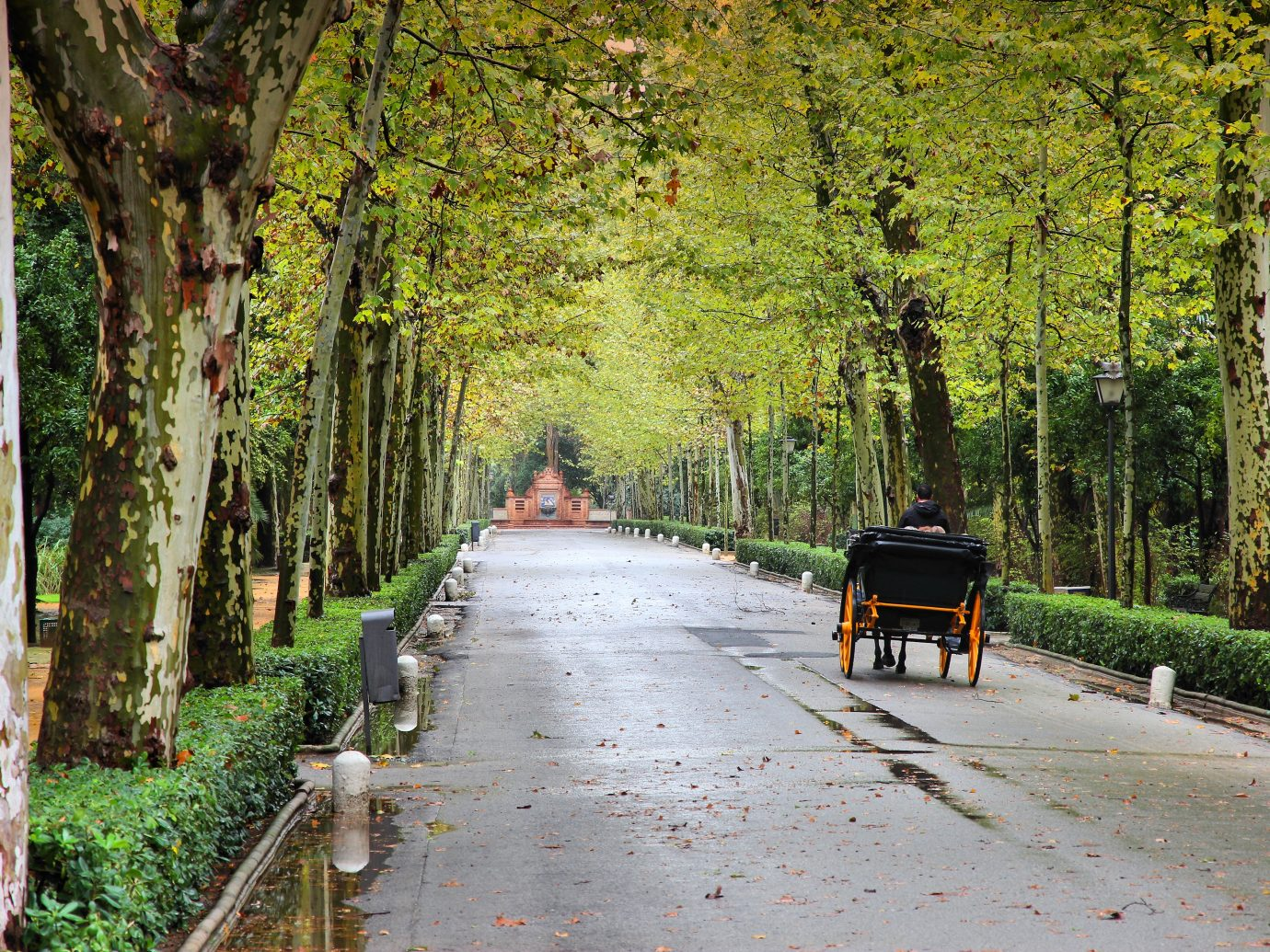 Seville, Spain - famous Maria Luisa park. Plane tree lined alley.