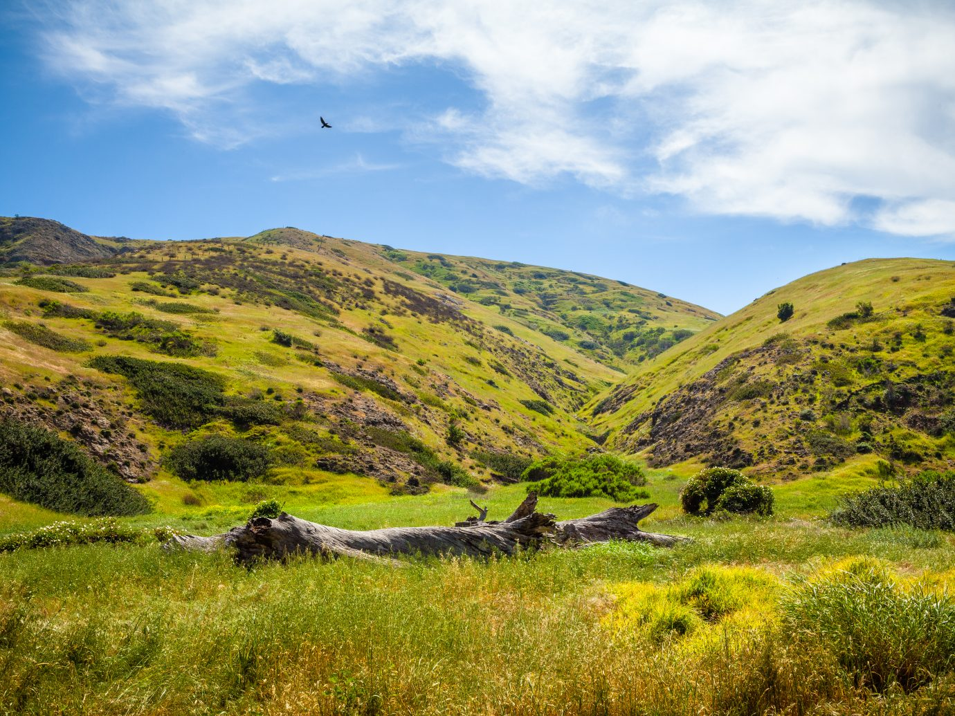 Grassy hills on the eastern end of Santa Cruz Island, California, in Channel Islands National Park, near the Scorpion Ranch campground.