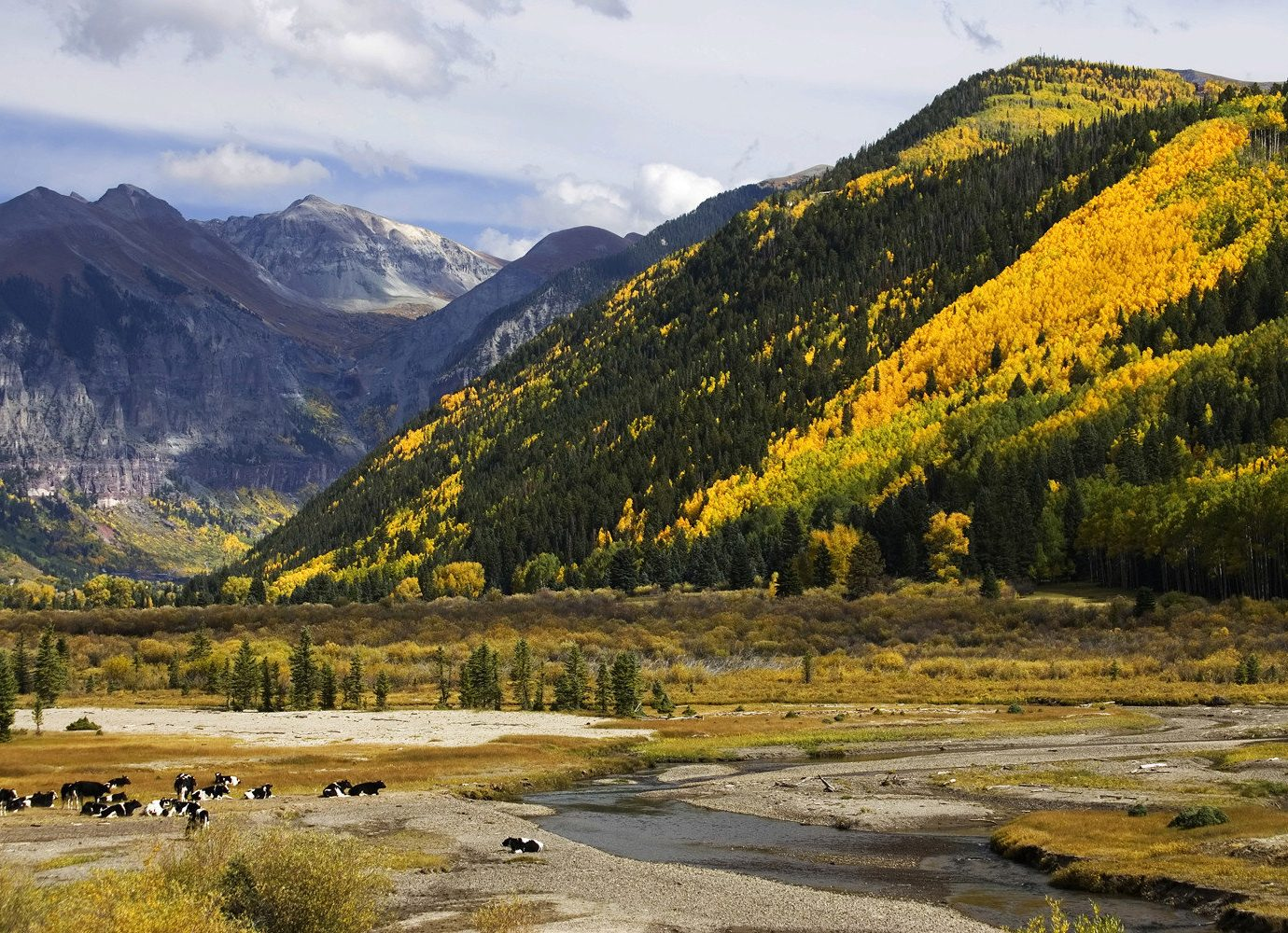 Foliage on mountains in Telluride