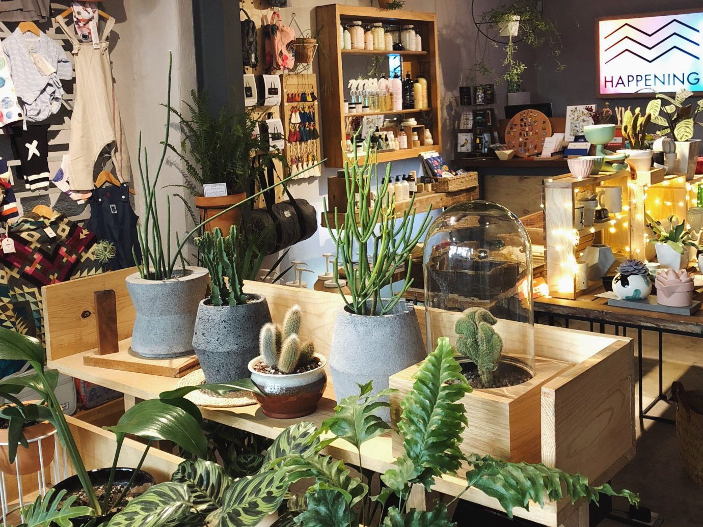 Interior of Happening with succulents in the store in Mexico City