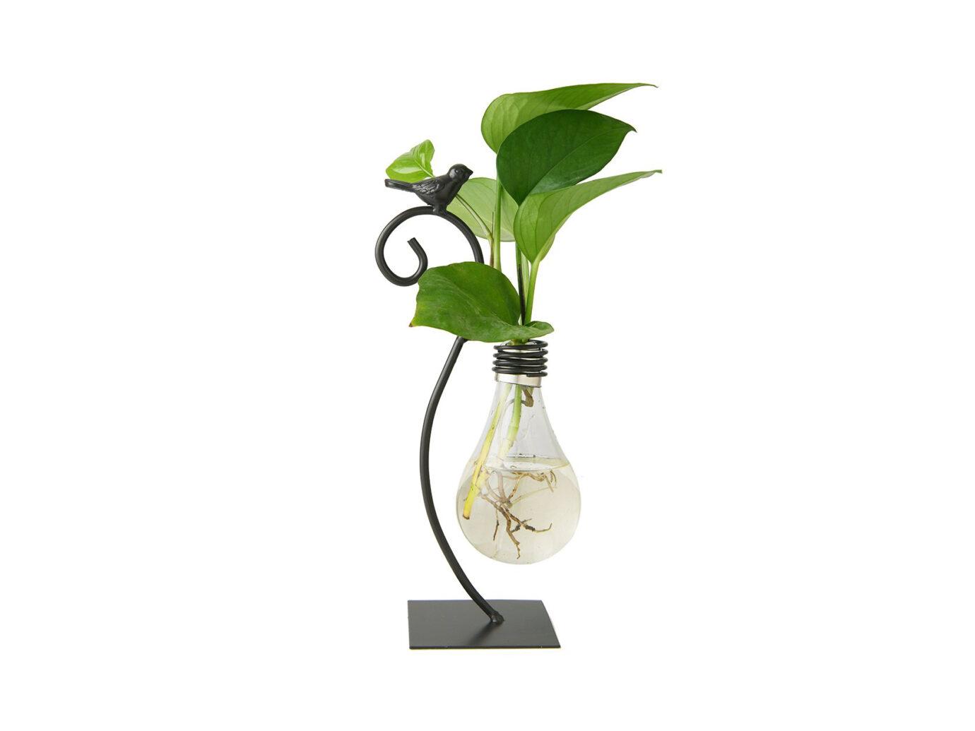 Marbrasse Desktop Glass Bulb Planter Vase