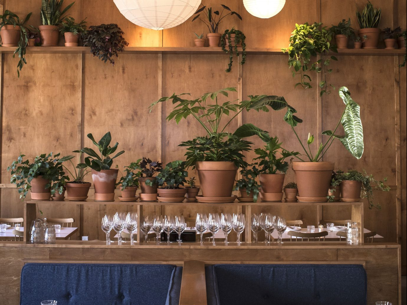 Booths and ledge with potted plants and glassware
