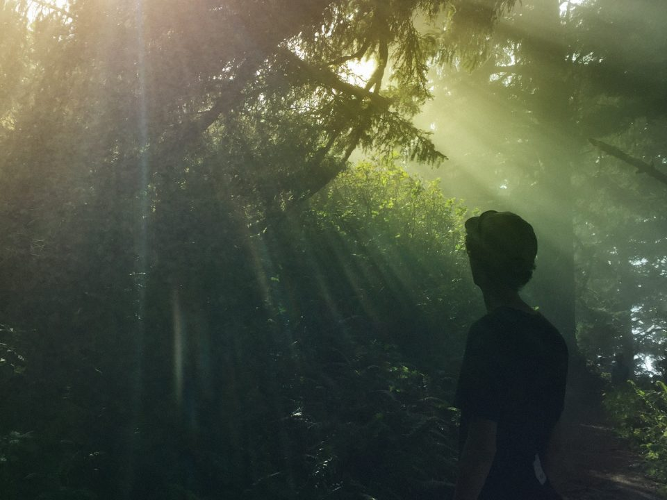 rays of light falling on a person in the forest