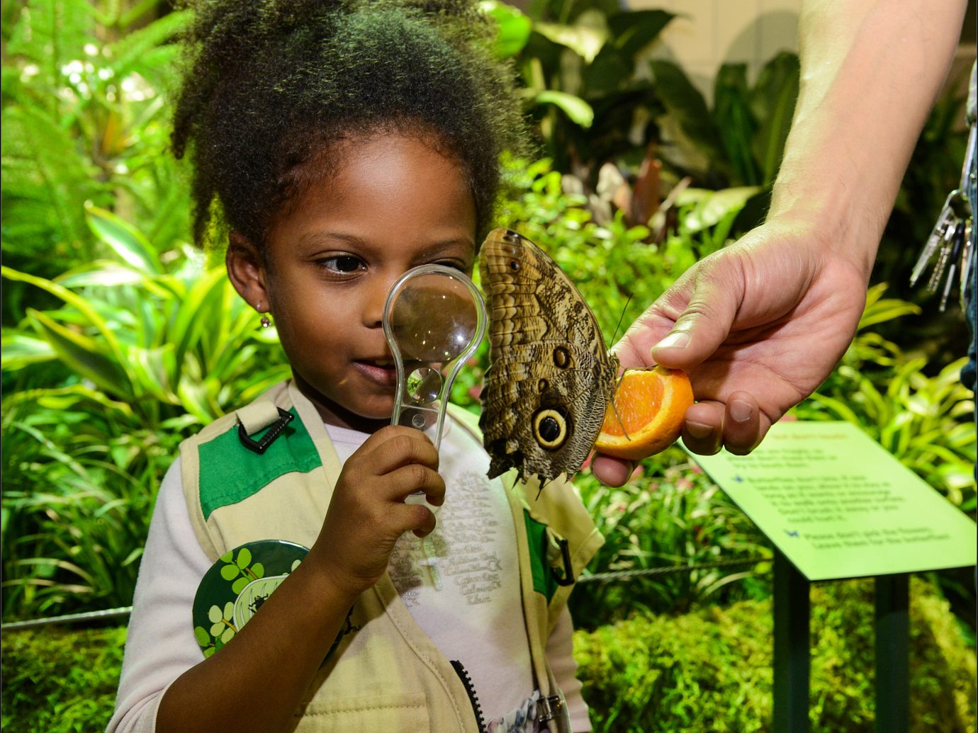 little girl with magnifying glass looking at butterfly