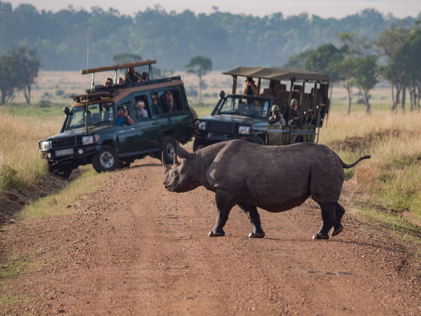 Rhino Crossing the Road in Namibia Africa