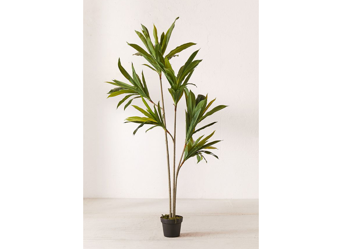 Dracena 5' Potted Faux Tree